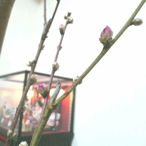 *桃の花*